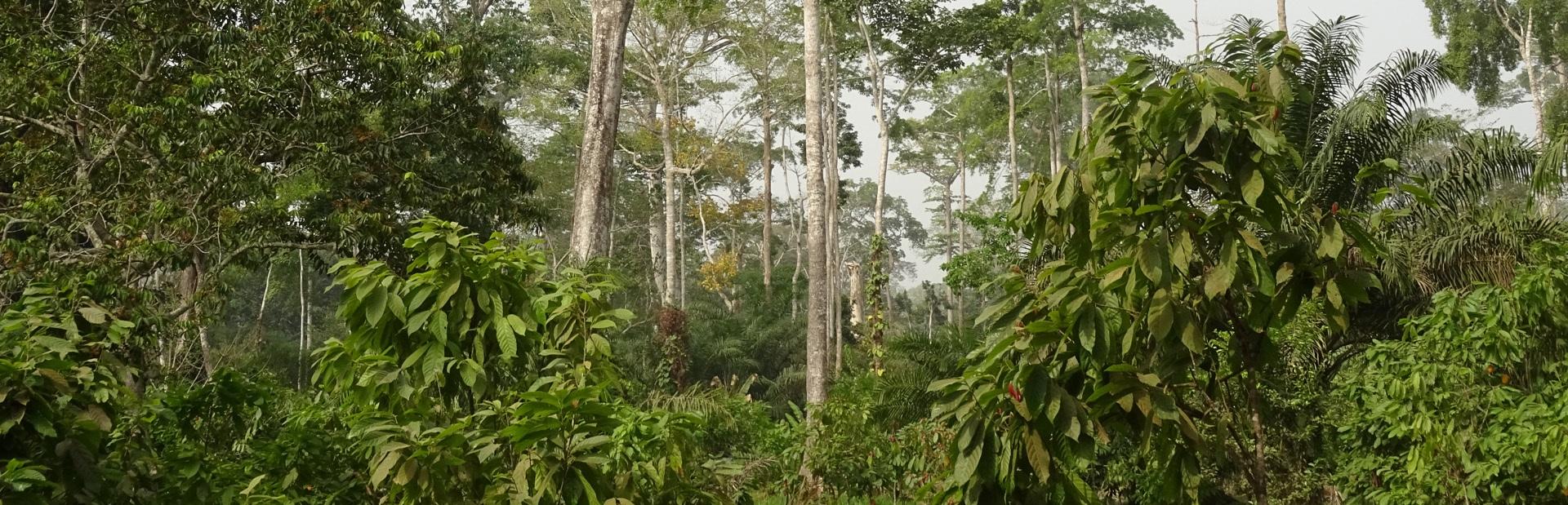 Energy Biomass Sourcing